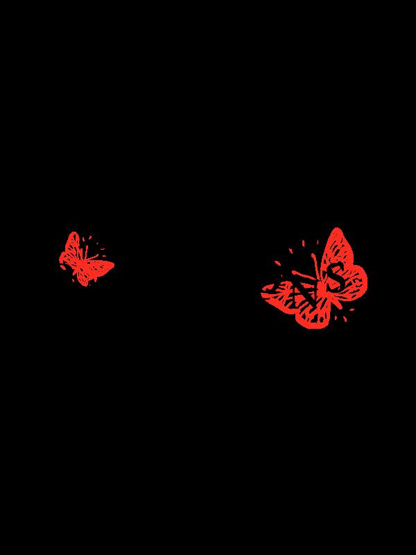 produit torrefaction papillons - Aeropress