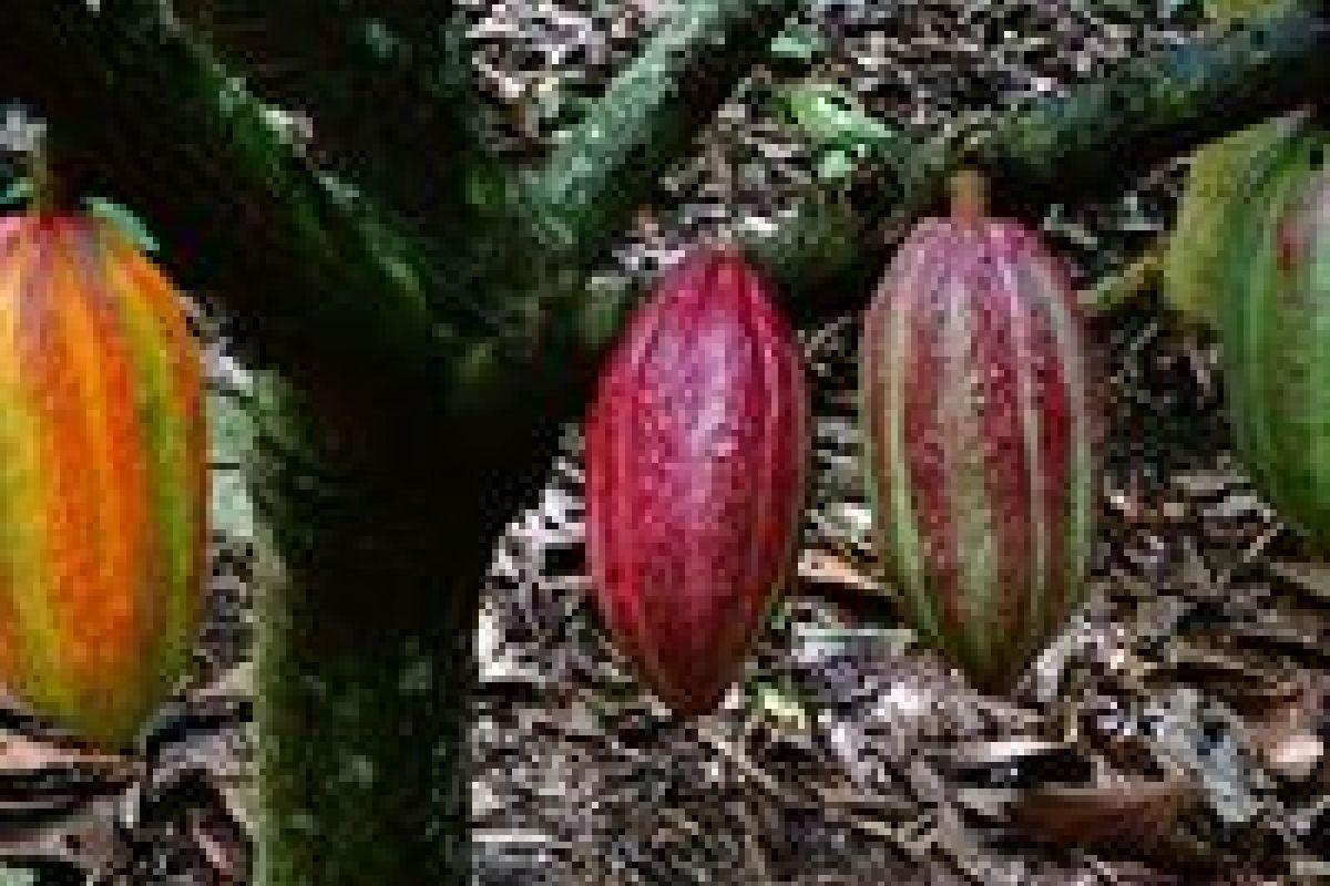 img produit Belize Black 100% Bio