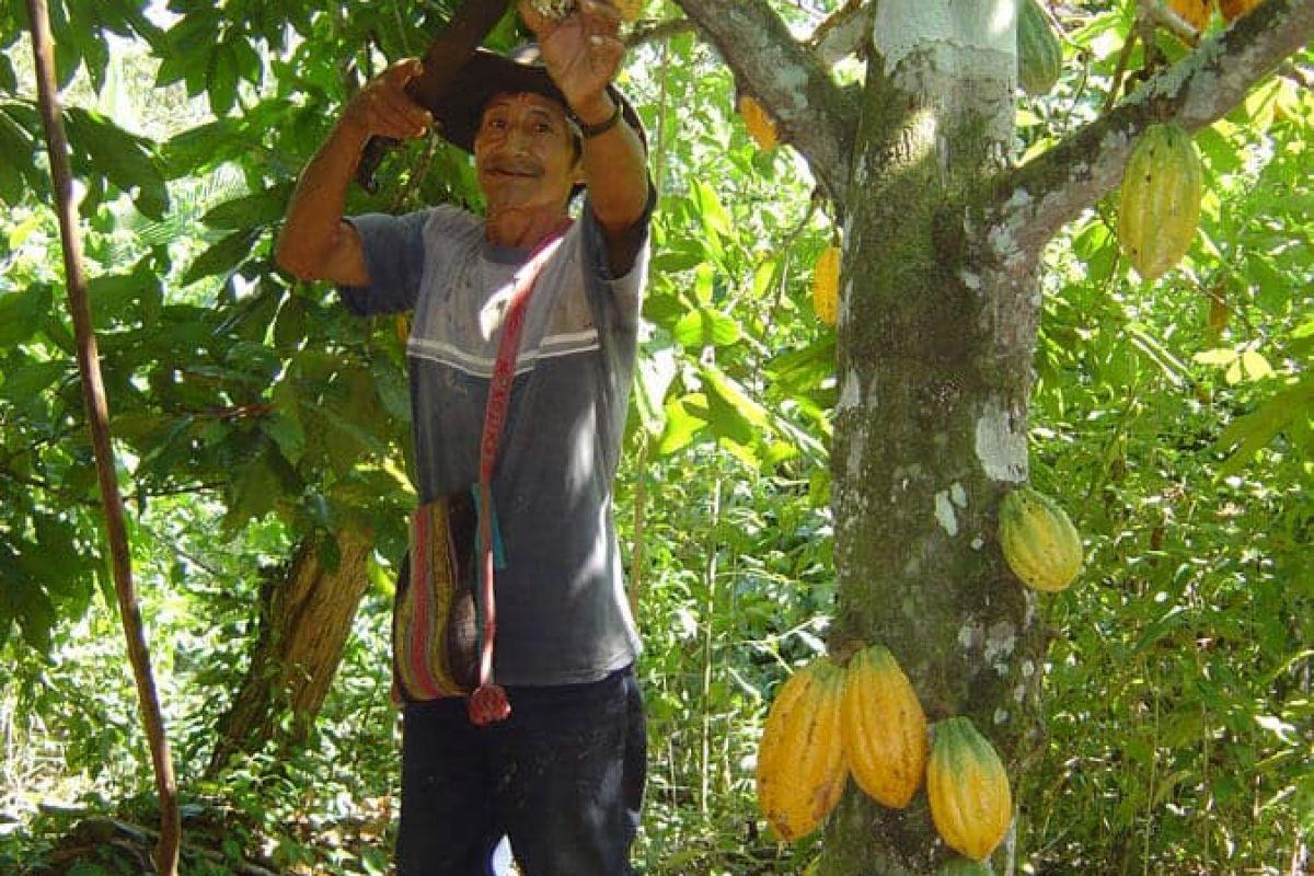img produit Noir 69% - Eclats Cacao