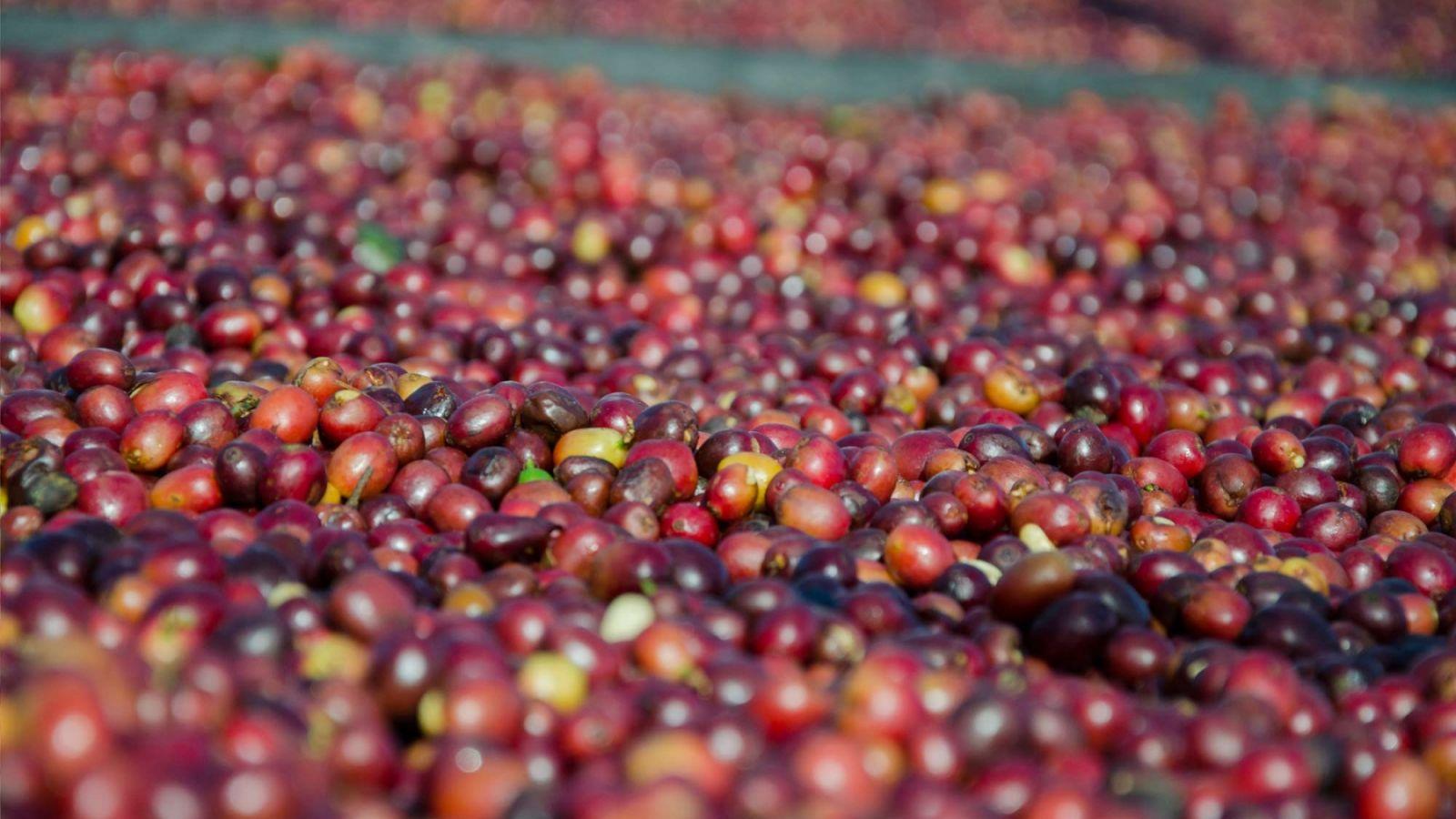 papillons torrefaction lyon - Le café, un produit frais de saison ??